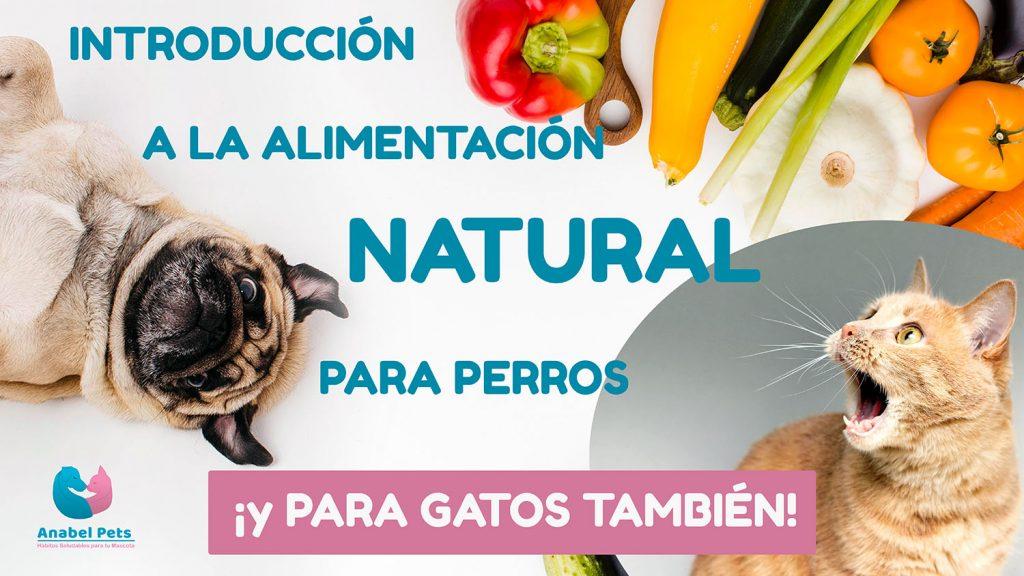 Curso de Alimentacion Natural para perros y gatos